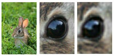 משמאל לימין: התמונה המקורית, צילום עם זום אופטי, צילום עם זום דיגיטלי