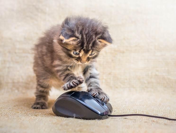 איך לבחור עכבר למחשב